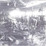 Despiece de atunes en la Almadraba de Sancti Petri