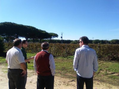 Viñas de Campano
