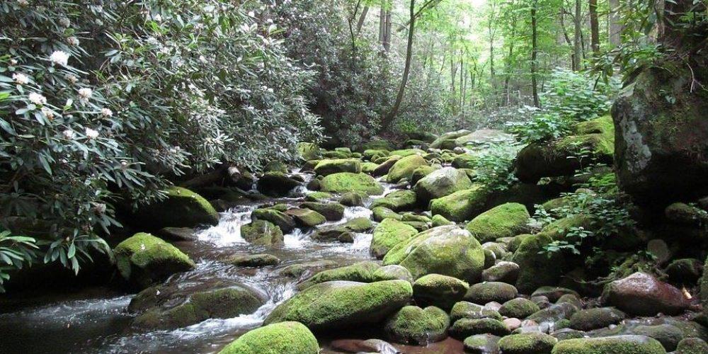 Proyecto para impulsar el turismo de naturaleza